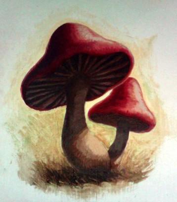 mushroom_wip